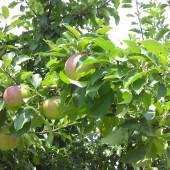 いきなり果物を食べ出す年齢